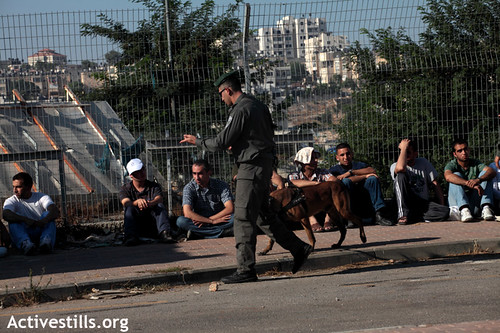 Men detained by Israel Border Police after crossing The Wall while trying to go to pray at Al-Aqsa - ActiveStills photo taken on 17 Aug 2012