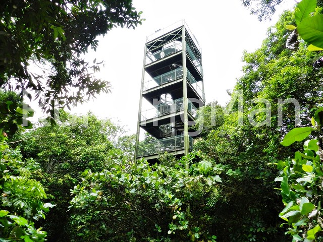 MacRitchie Reservoir Park & HSBC TreeTop Walk 09