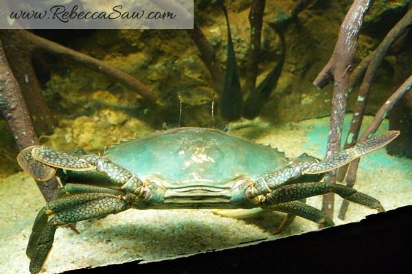 Singora Tram Tour - songkhla aquarium thailand-007