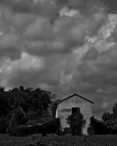 blackandwhite abandoned barn rural northcarolina soybeancrop idontknowexactlywhereiwas backroadsomewherenearagasstationistoppedat waswaytocheeryincolor