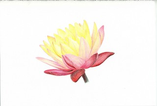 2012_08_22_waterlily