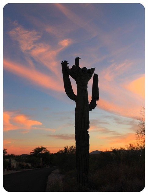 tucson sunset skies & cactus