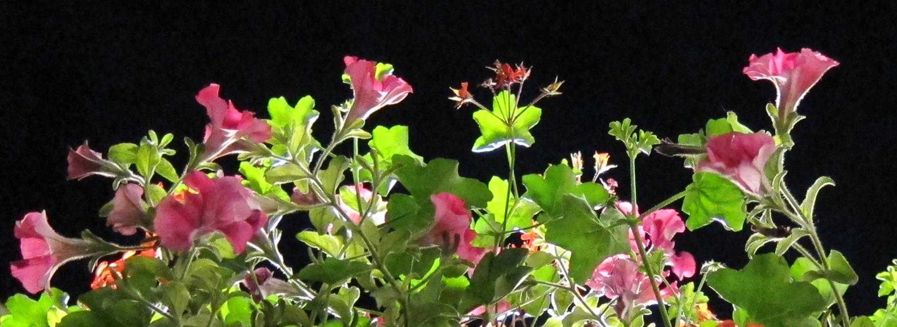 Kukat ja yötaivas