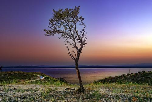 無料写真素材, 自然風景, 樹木, 朝焼け・夕焼け
