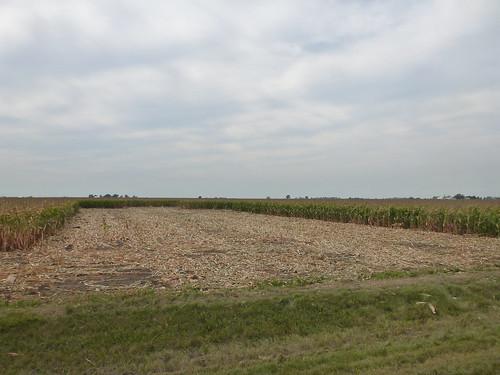 Homestead - Corn Cut