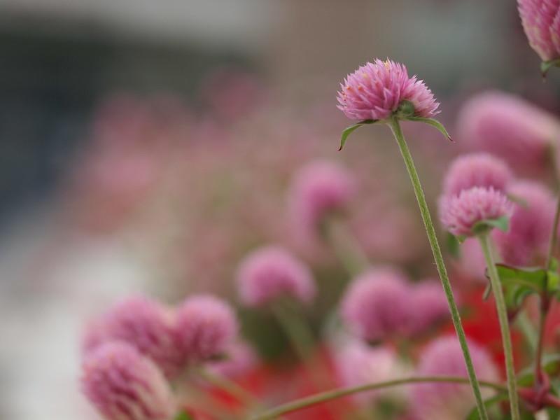 Flowers in Kobe