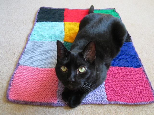 school knitting club cat blankie paws up (2)