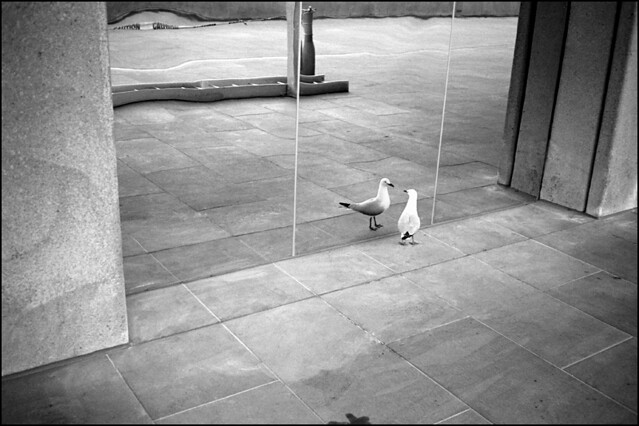 Birds - Minimalism in Street Photography