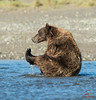Brown Bear Leg Lifts by Glatz Nature Photography