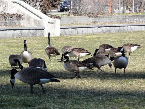 Birds on Roosevelt Island