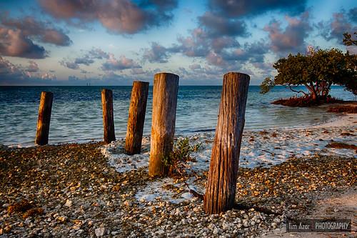 ocean tree beach water clouds sunrise keys landscape coast sand florida cloudy tide shoreline roots mangrove shore tropical pilings islamorada hdr floridakeys saltwater maritimeforest 2exposures annesbeach lowermatecumbekey nikdfine timazar hdrefexpro2 anneeaton