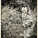 Evanescence : Camera Work 1906 by Garry Corbett