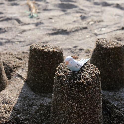 ビーチに登場したインコ。