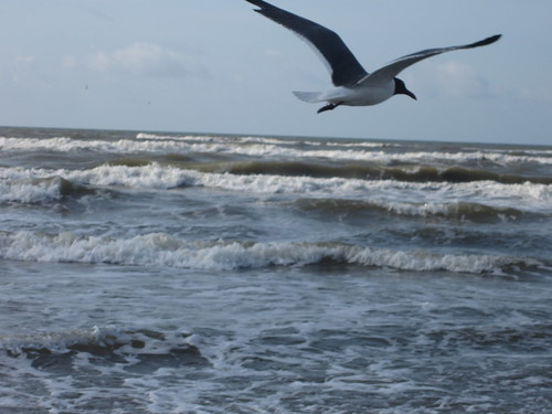 Seagull of the Ocean