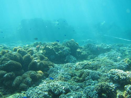 南邊-許多軟珊瑚