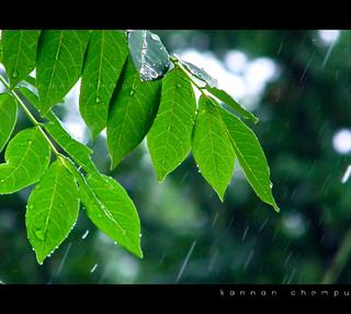 Green _Rain