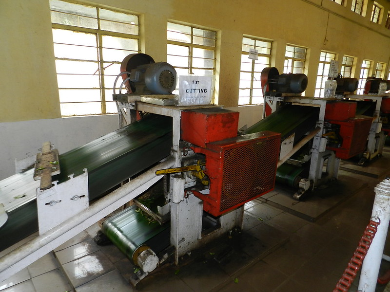 Tea Factory Machinery for cutting