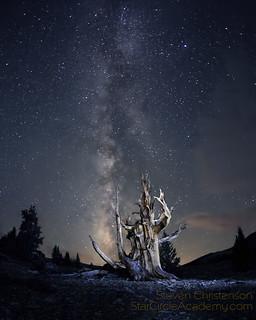 Harold's Tree Snuggles into the Milky Way [C_061999]