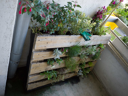 Pallet garden, end of August version (too much had died)