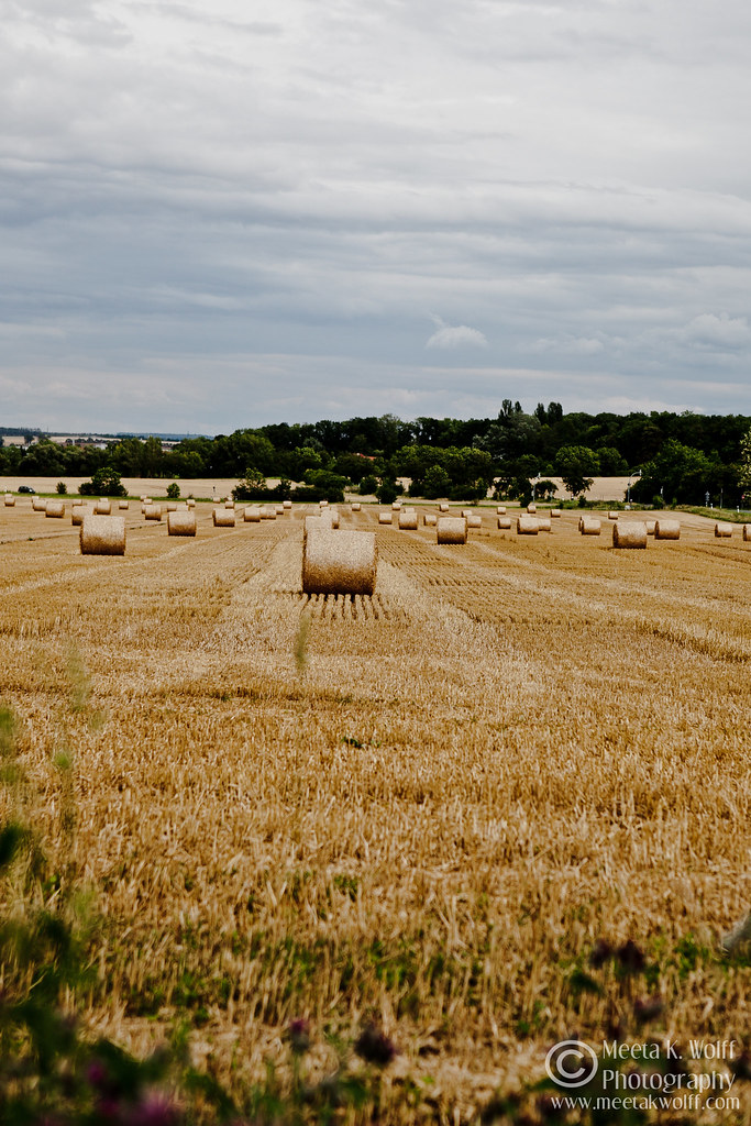 Hay Rolls by Meeta K. Wolff