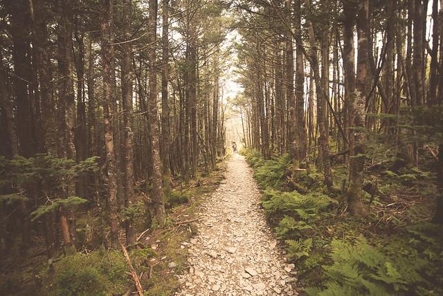 essay on a worn path by eudora welty