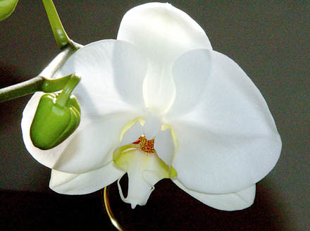 summer-becky's orchid