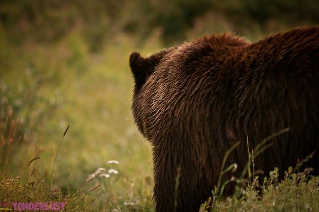 AlaskaConservationPark-8.jpg