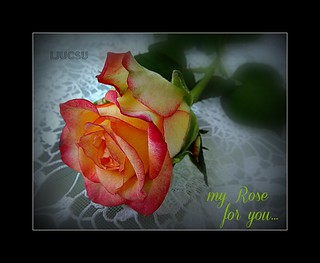 my Rose for you...