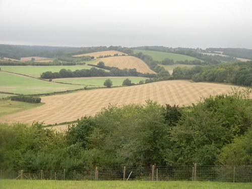 Herringbone field