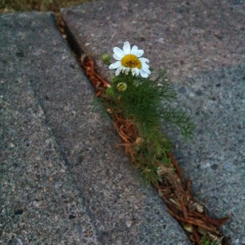 Blooming through adversity...
