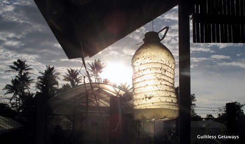 insect-trap-philippines.jpg