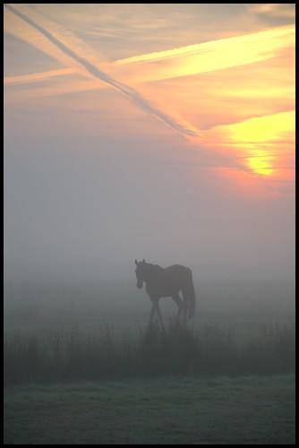 sky horse nature silhouette sunrise licht nebel natur earlymorning himmel september fantasy sonnenaufgang pferd 2012 fantasie phantasie frühermorgen