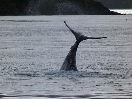 Ballena en el Estrecho de Magallanes