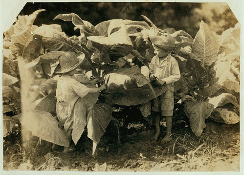 "Amos is 6 and Horace 4 years old. Their father, John Neal is a renter and raises tobacco. He said (and the owner of the land confirmed it) that both these boys work day after day from ""sun-up to sun-down"" ...Location: Warren County--Albaton, Kentucky (LOC"