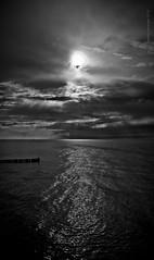 Dark water (120804_ostsee x 229)