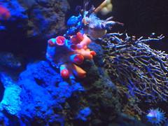 fish(0.0), pomacentridae(0.0), coral reef(1.0), coral(1.0), organism(1.0), marine biology(1.0), invertebrate(1.0), aquarium lighting(1.0), underwater(1.0), reef(1.0), sea anemone(1.0),