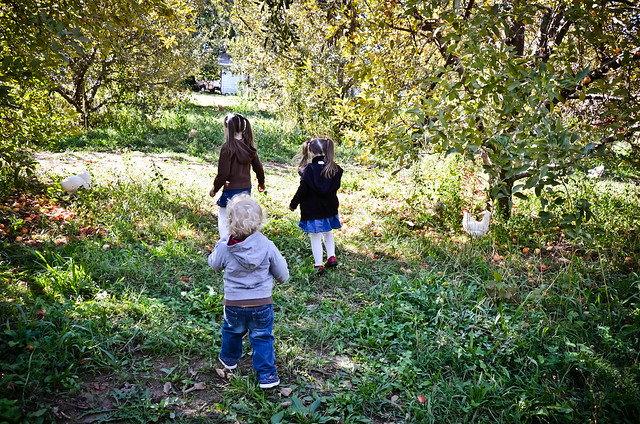 Apple Orchard | 09/22/2012