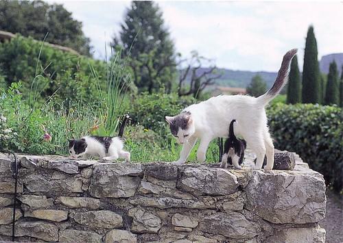Mama & Kittens