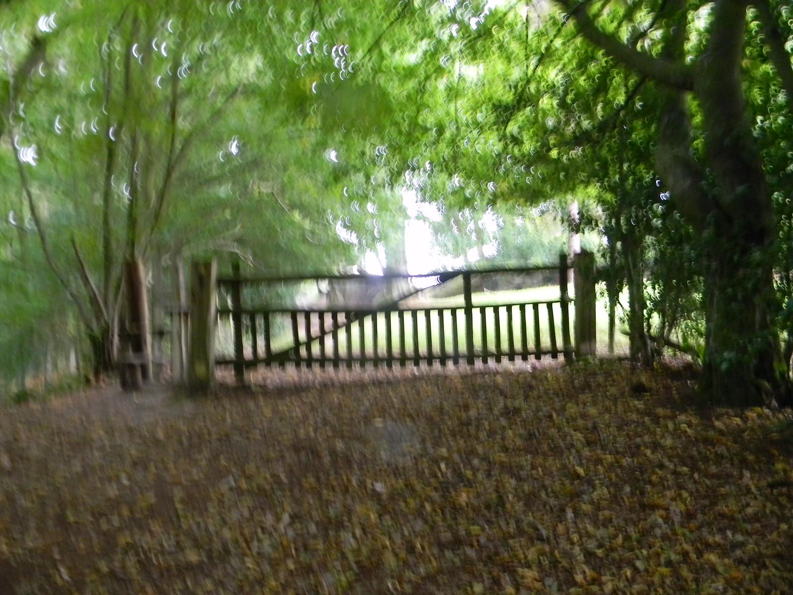Gate Eridge to Forest Row