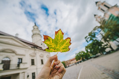 Autumn Leaf   Kaunas #243/365
