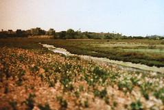 Porst SP Ballona Wetlands 3