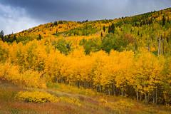 Grand Mesa Fall Colors (9-21-16)