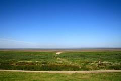 Wadden Sea - tidal marsh