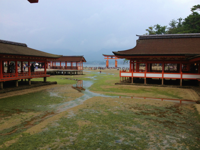 潮が引いた厳島神社