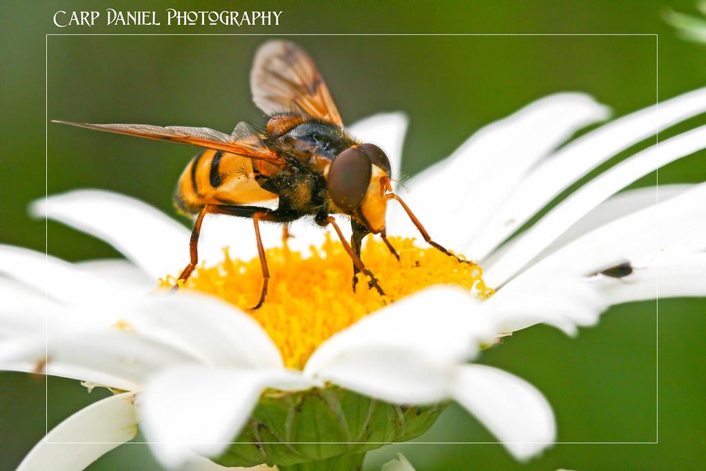 IMAGE: http://farm9.staticflickr.com/8306/7814046416_666ee51404_b.jpg