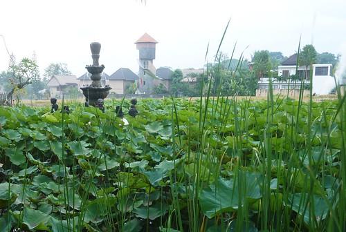 Bali- Ubud-Rizières (93)