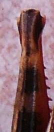 P1200735