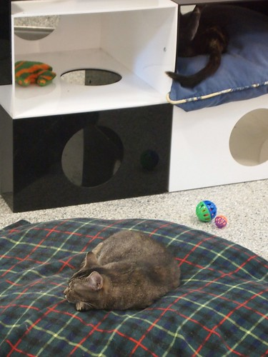 kitty nap