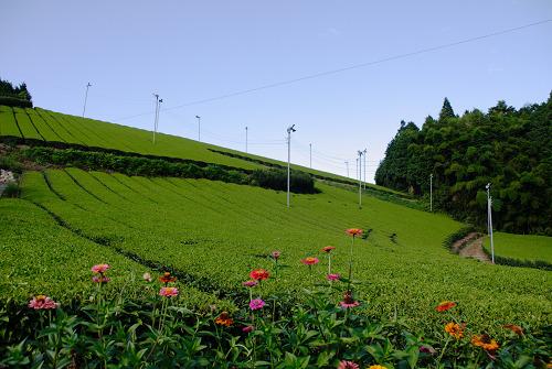 <写真>緑と青と白の世界@奈良市田原~柳生エリア