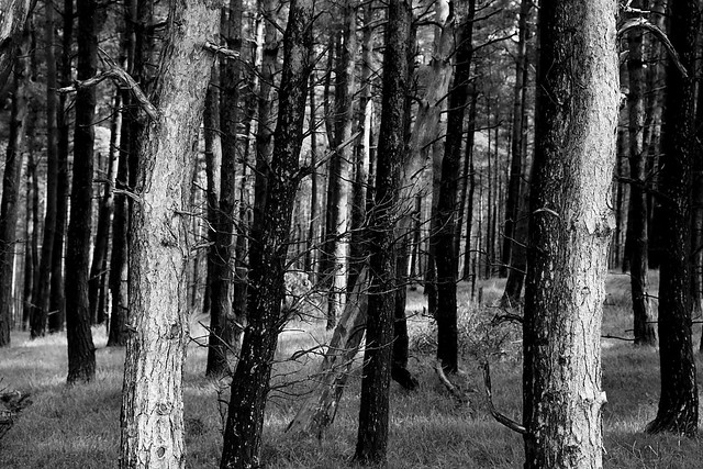 A black and white image of a forest and trees in the peak district.
